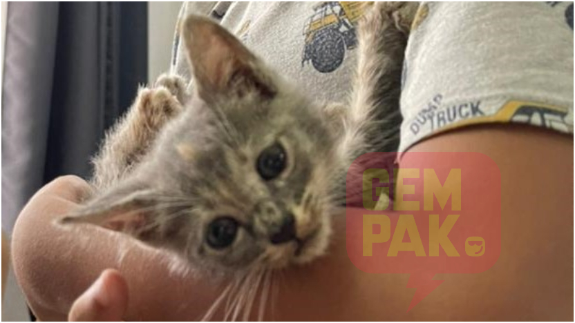 Panik Jumpa Anak Kucing Ditinggalkan Ibu Jangan Risau Cuba Ikut Tips Yang Kami Bagi Ni Gempak