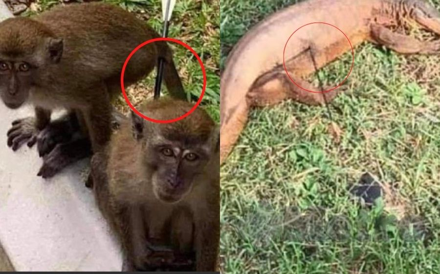 Kuala di lumpur haiwan taman Berkuda Serendah