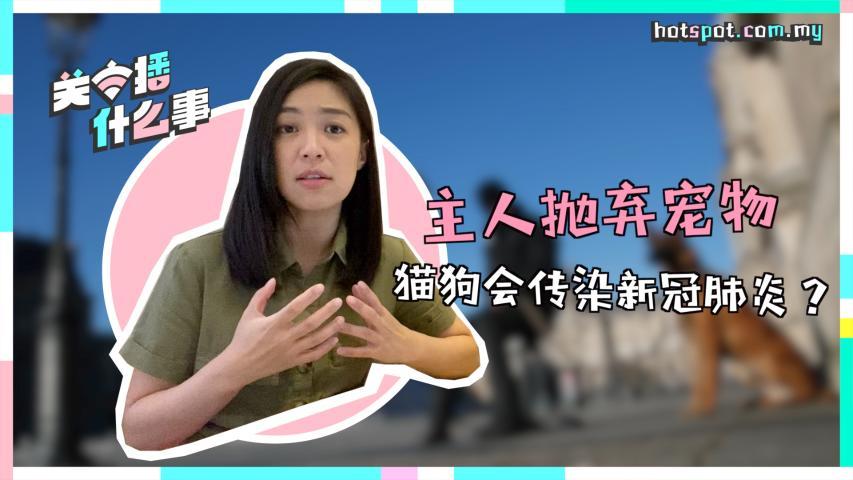 香港确诊病例传染宠物   猫狗会感染新冠肺炎吗?