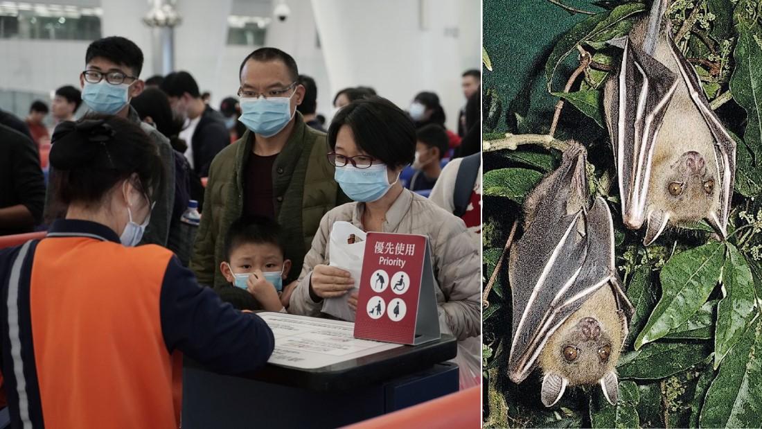 和SARS病毒相似,武汉肺炎源头可能是蝙蝠?