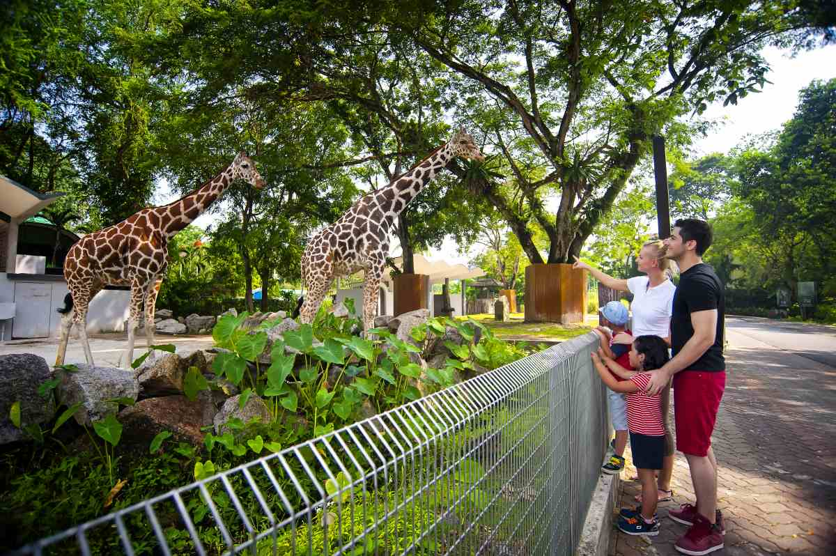 Zoo Negara needs our help.