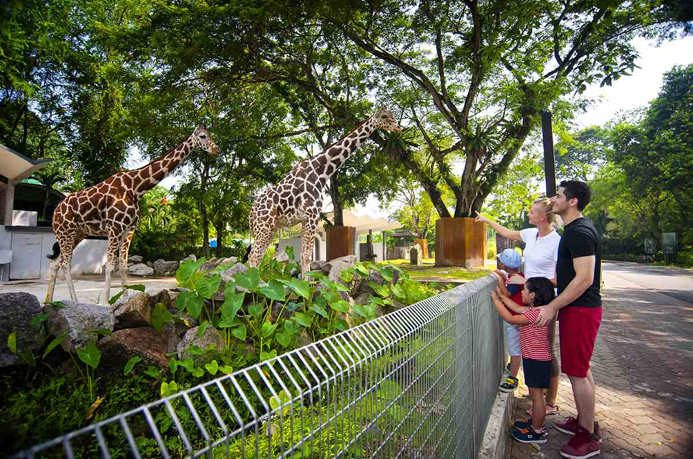 Zoo Negara Managed To Raise RM70,000 From Donations, But It Barely Covers Operational Costs