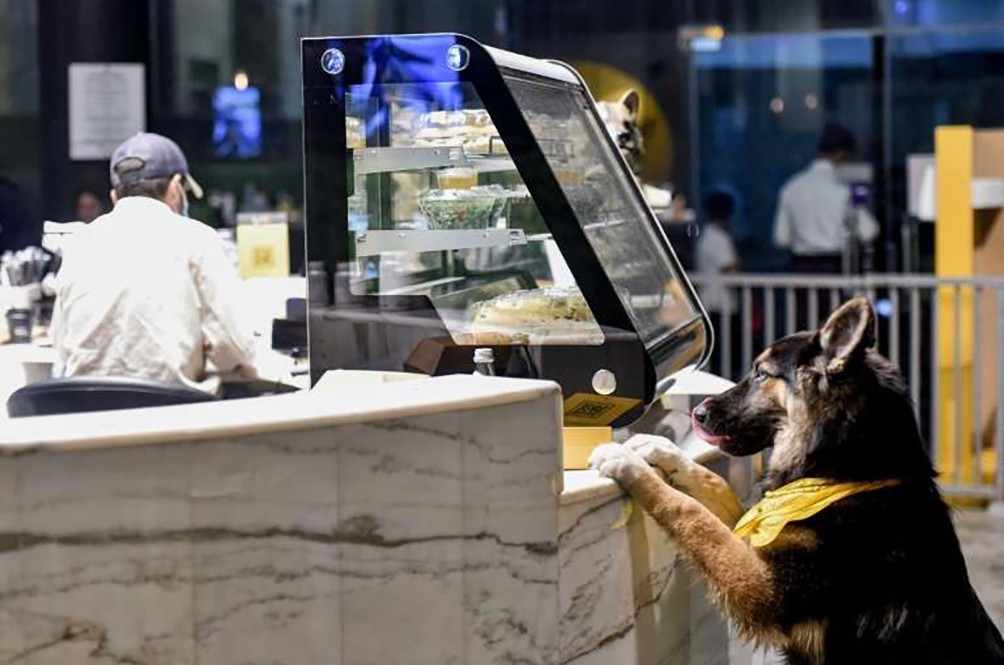 First Dog-Friendly Café Opens In Saudi Arabia
