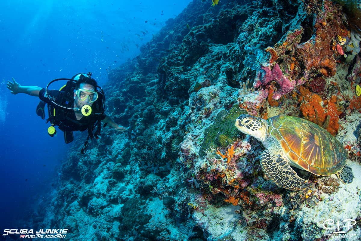 Malaysia is also one of the world's best diving sites.