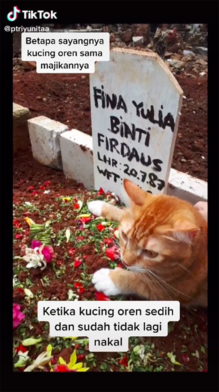 The cat stops crying when it sits on its owner's grave.
