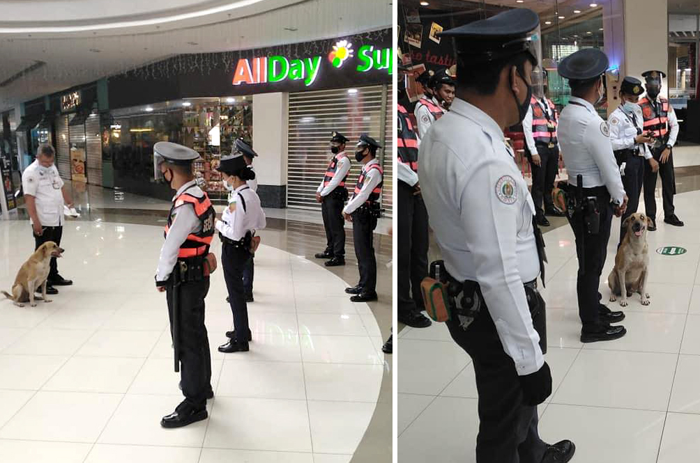 Good Boi Who Strayed Into A Mall In The Philippines Has Been Hired As Part Of Its Security Team