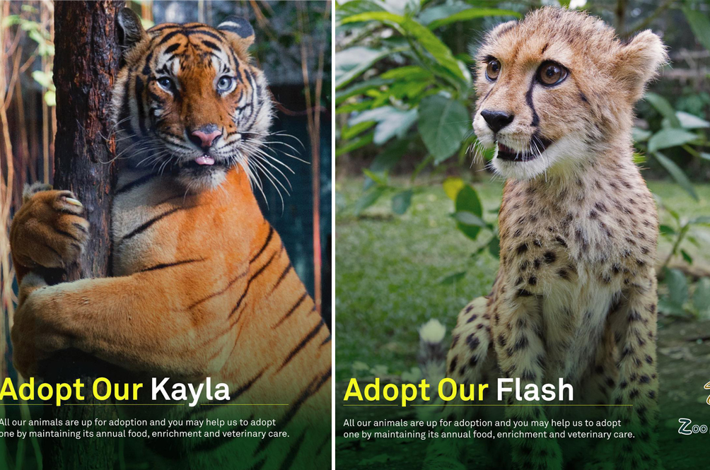 You Can Help Zoo Negara Out By Adopting Some Of Its Animals For Just RM25