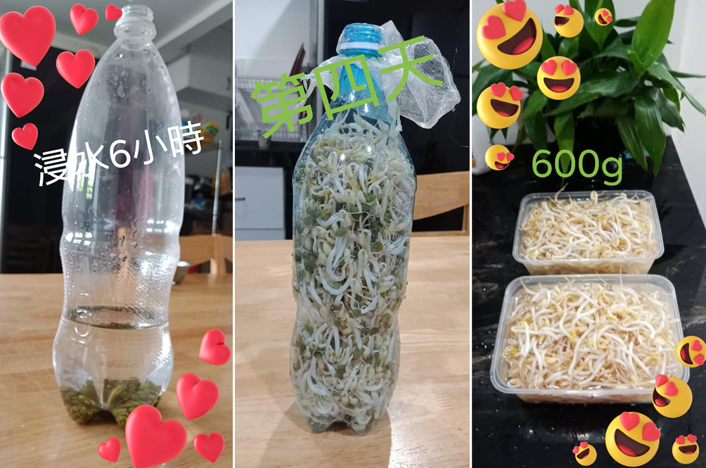 Learn How To Grow 600g Of Taugeh At Home Using Just Three Items In Just Five Days