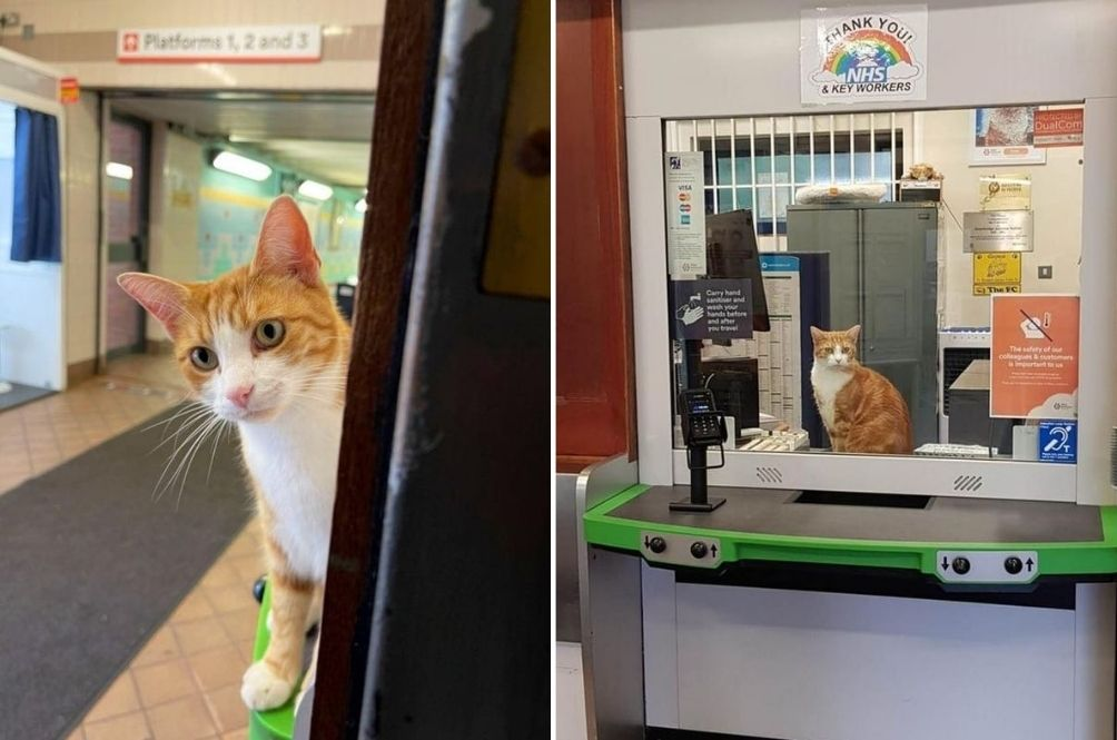 UK Train Station's Resident Cat Appointed Chief Mouse Catcher After Three Years Of Volunteer Work