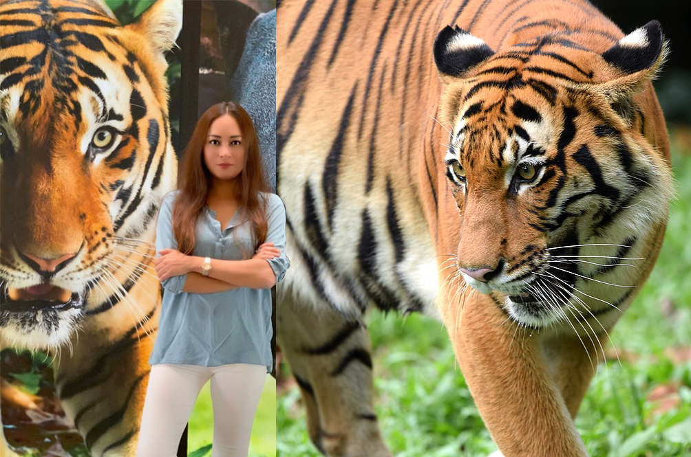 Local Actress Maya Karin Launches Campaign To Help Save Our Malayan Tigers