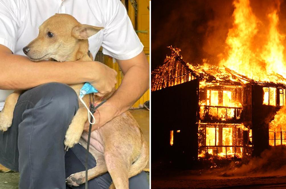 Superhero Doggo Saves Family Of Five From House Fire In Teluk Intan