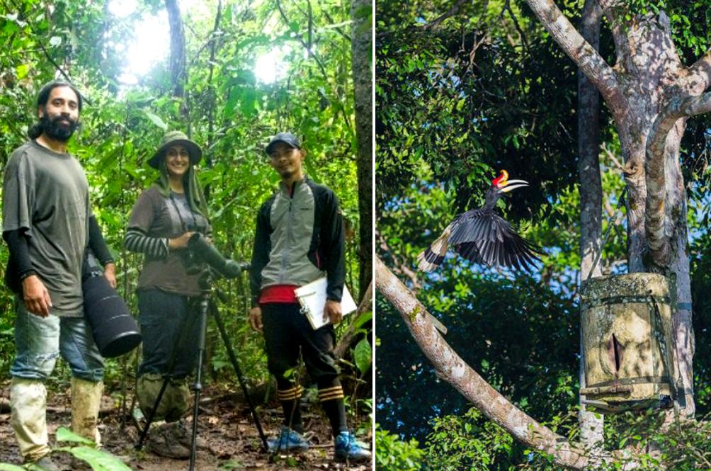 Malaysian Wildlife Researcher Wins International Award For Her Research On Hornbills