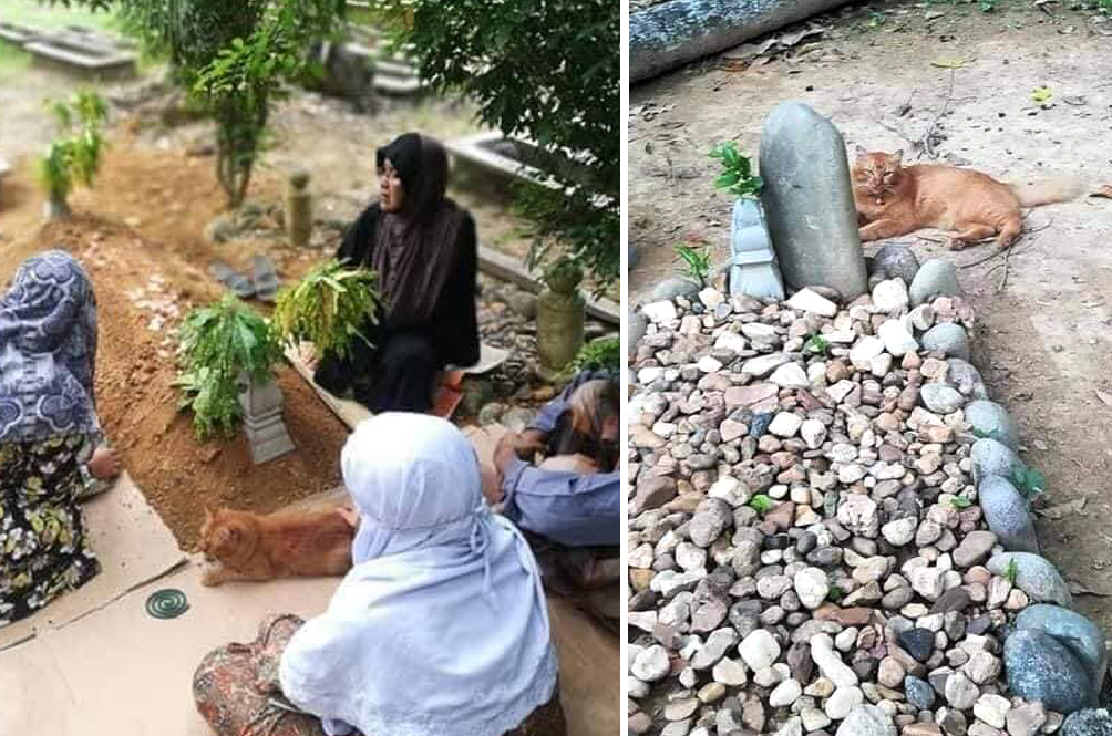 Loyal Meow In Kelantan Visits Late Owner's Grave Everyday For The Past Two Years