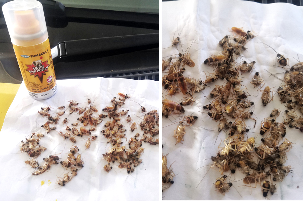 Man Shares Simple Yet Effective Way Of Killing All The Cockroaches In Your Car In Just One Night