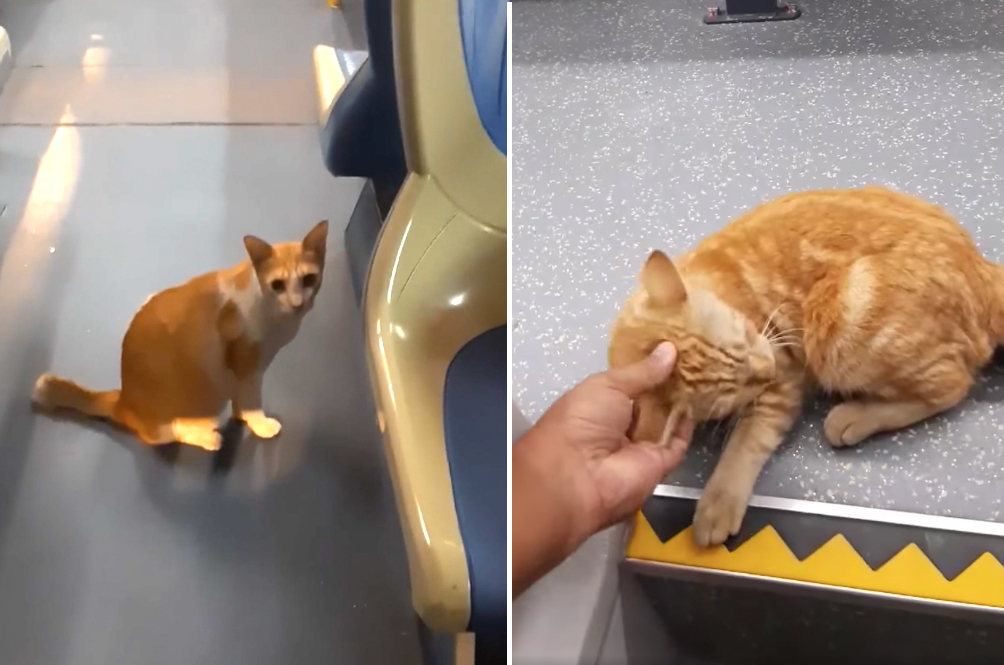 [VIDEO] Clever Stray Catto Hitch Hiking On A Rapid KL Bus Makes Netizens Go 'Aww'