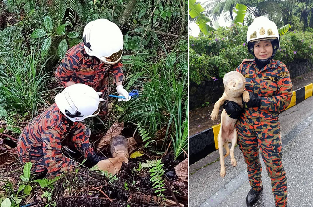 Two Kakak Firefighters Rescue Dog With Head Stuck In Plastic Container From Genting Hillside
