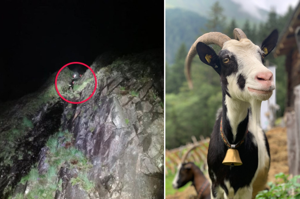 British Couple, Stranded On Steep Cliff, Calls For Help But Was Mistaken For Mountain Goats