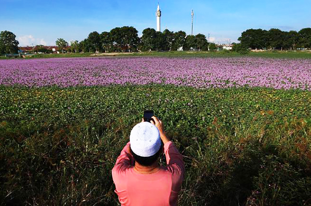20 Malaysians Were Fined RM1,000 Each For Taking Photographs Of Flowers In A Pond