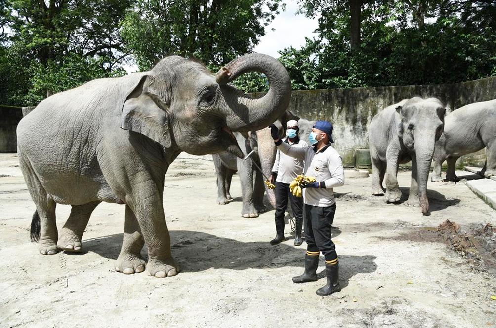 Go On A Tour Around Zoo Taiping And Night Safari With Their Virtual Tour Programme