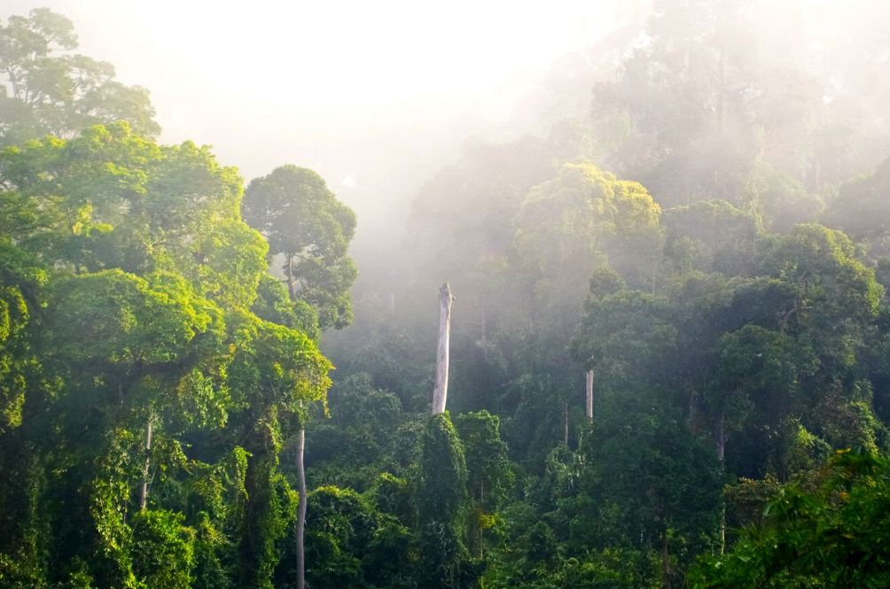 Report: Thousands Of Tree Species In Malaysia Are At Risk Of Extinction