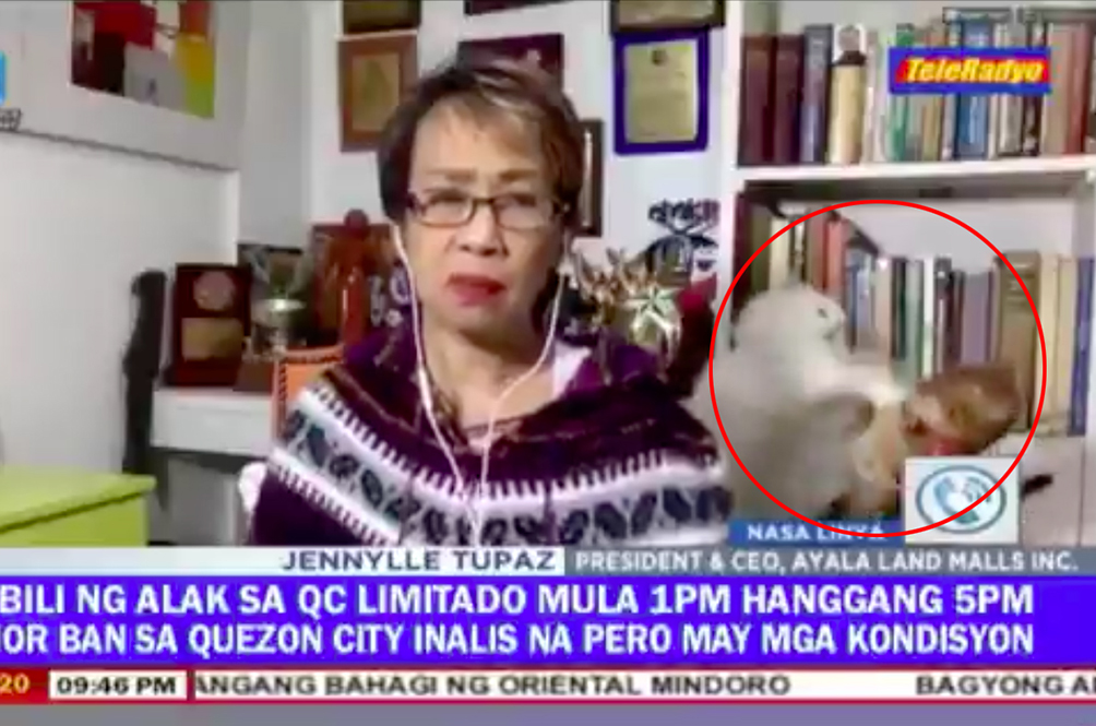 [VIDEO] Filipino Reporter Tries Hard To Stay Calm On Live TV As Her Cats Fight Furiously In The Background