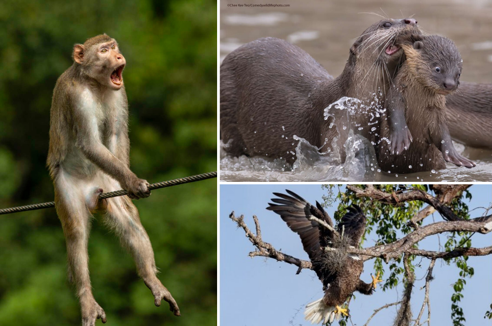The Comedy Wildlife Photography 2021 Finalists Have Been Announced, And They Are Gold!