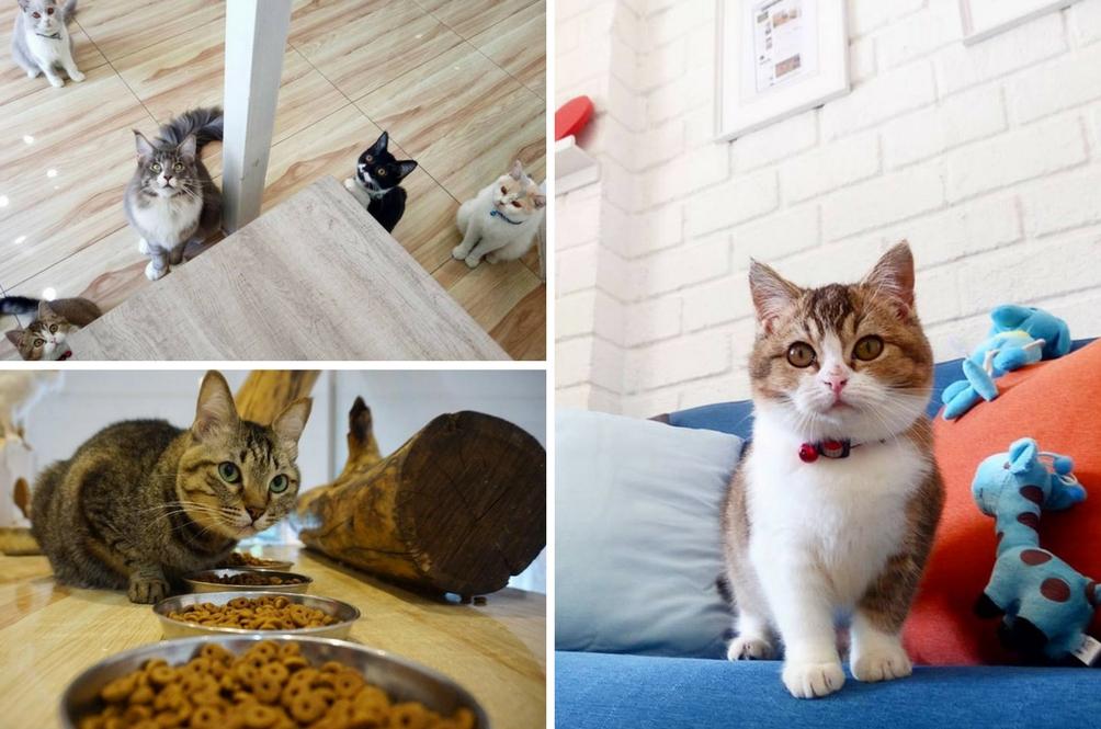 Tepi Sikit Manusia, Kini Kucing Juga Ada Hotel 5 Bintang