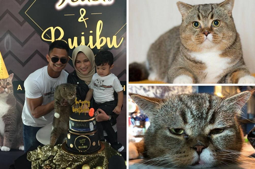 Kucing Paling Popular Malaysia Sambut Ulang Tahun Ke-3, Happy Birthday Bujibu Chempel