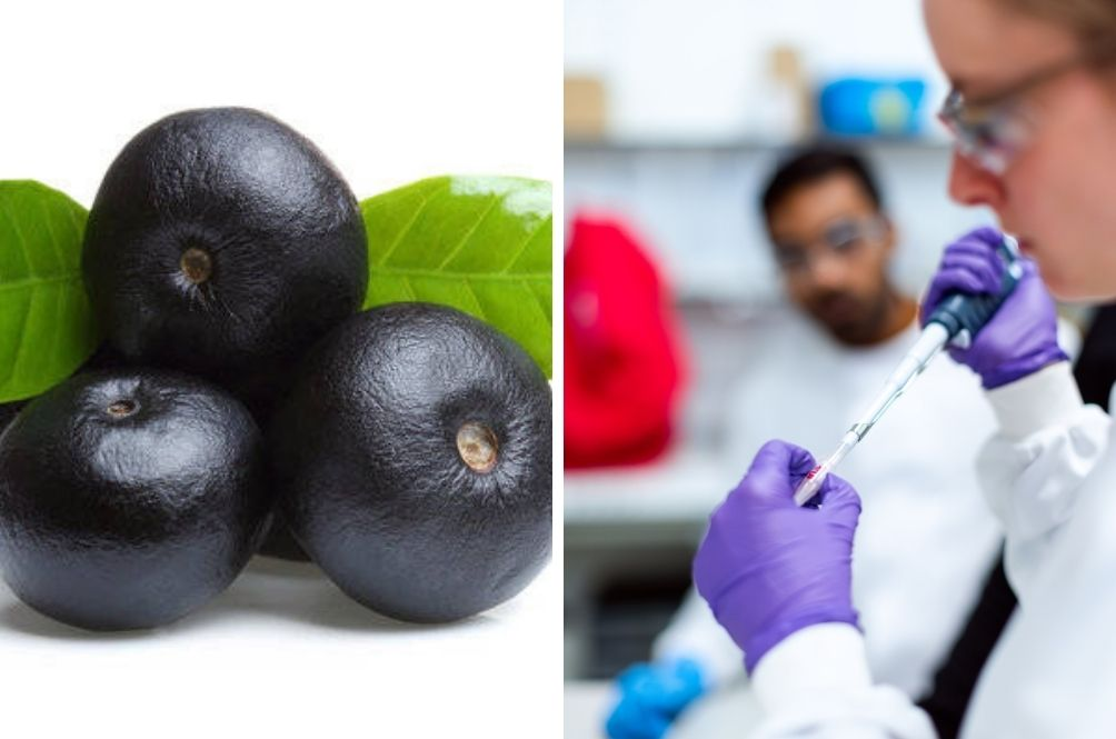 Could Acai Berries Help Fight COVID-19? Canadian Researchers Are Trying To Prove It Can