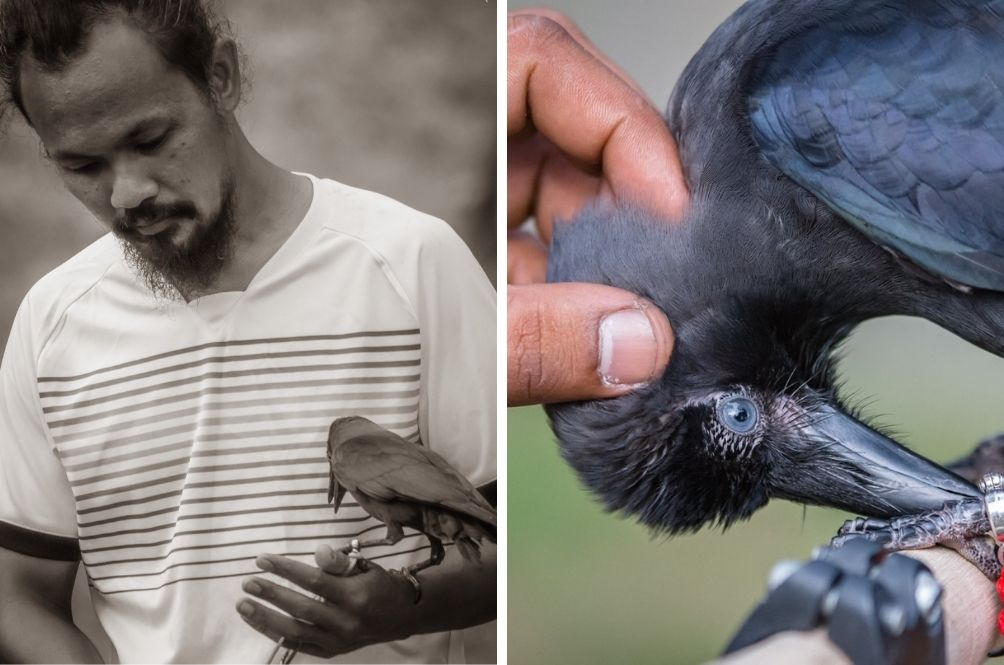 Singapore Man Keeps Crow As Pet, Trains It To Hunt For Coins And Other Tricks