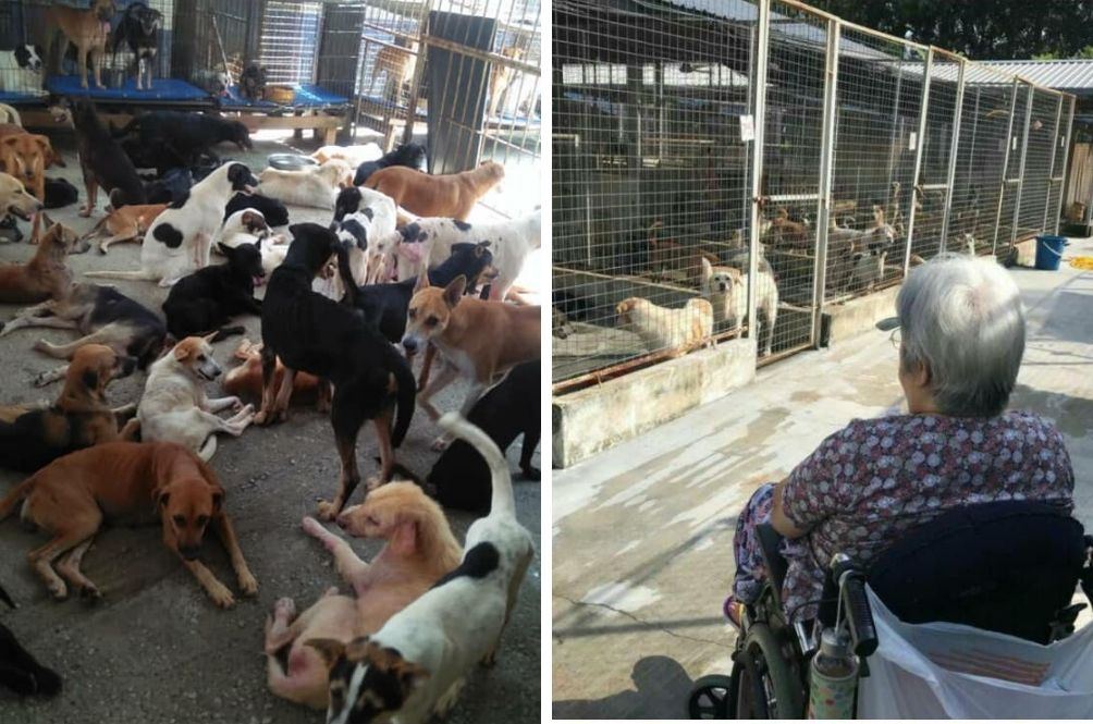 10-Year-Old Animal Shelter In Semenyih Seeking Public Donations To Continue Operating
