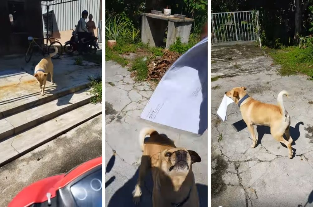The Adorable Friendship Between Postman Munir And Anep The Dog
