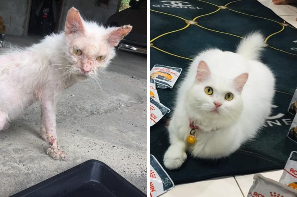What A Lil' Love And Care Can Do, Street Cat's Before And After Transformation Stuns Netizens