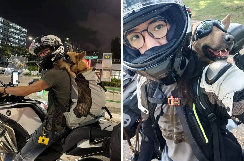 Pawsitively Adorable: Cool Doggo Spotted Riding On Motorbike With Owner In Singapore
