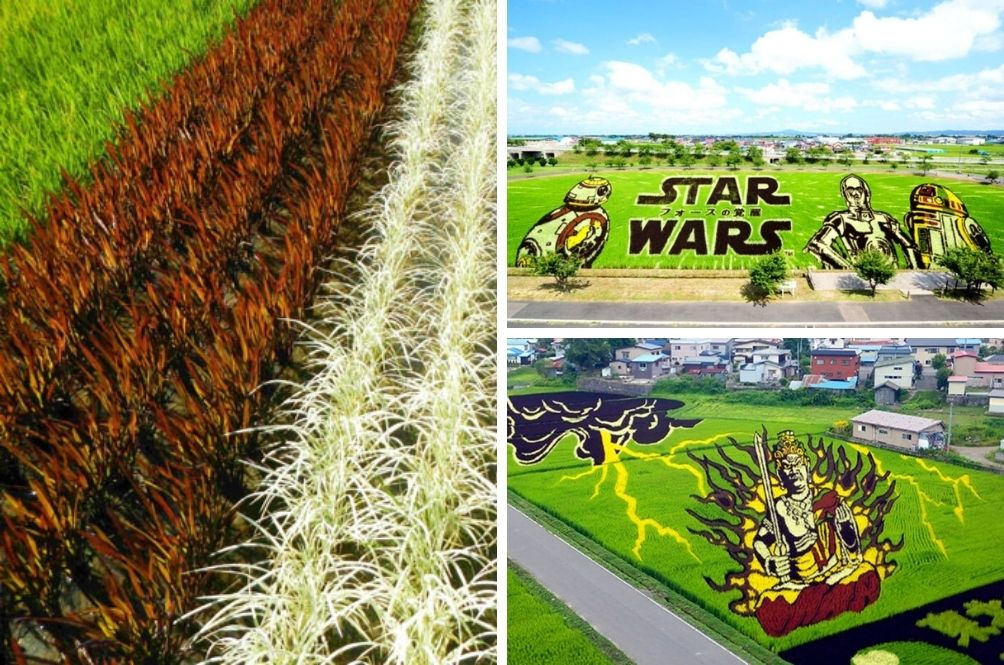 Incredible! This Village In Japan Grows Different Coloured Paddy In Their Fields To Create Art