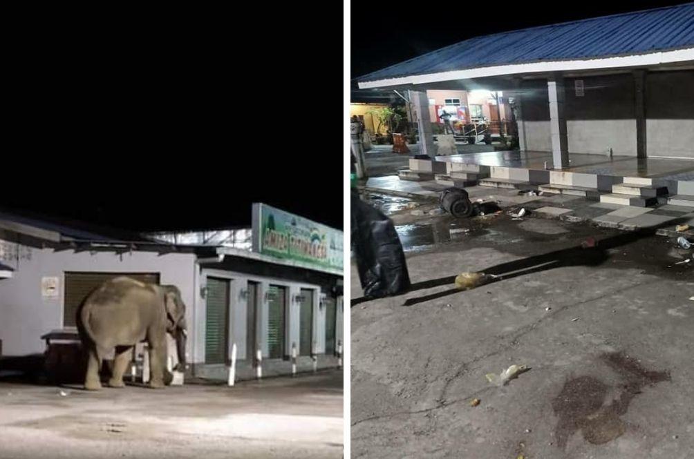 Surprise Visit: Elephant Enters Shop Near Banjaran Titiwangsa Rest Area Looking For Food