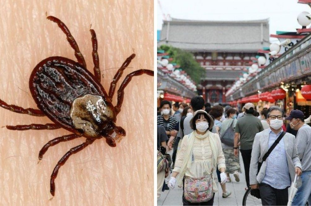 Infectious Tick-Borne Virus Has Killed 7 And Infected 60 In China
