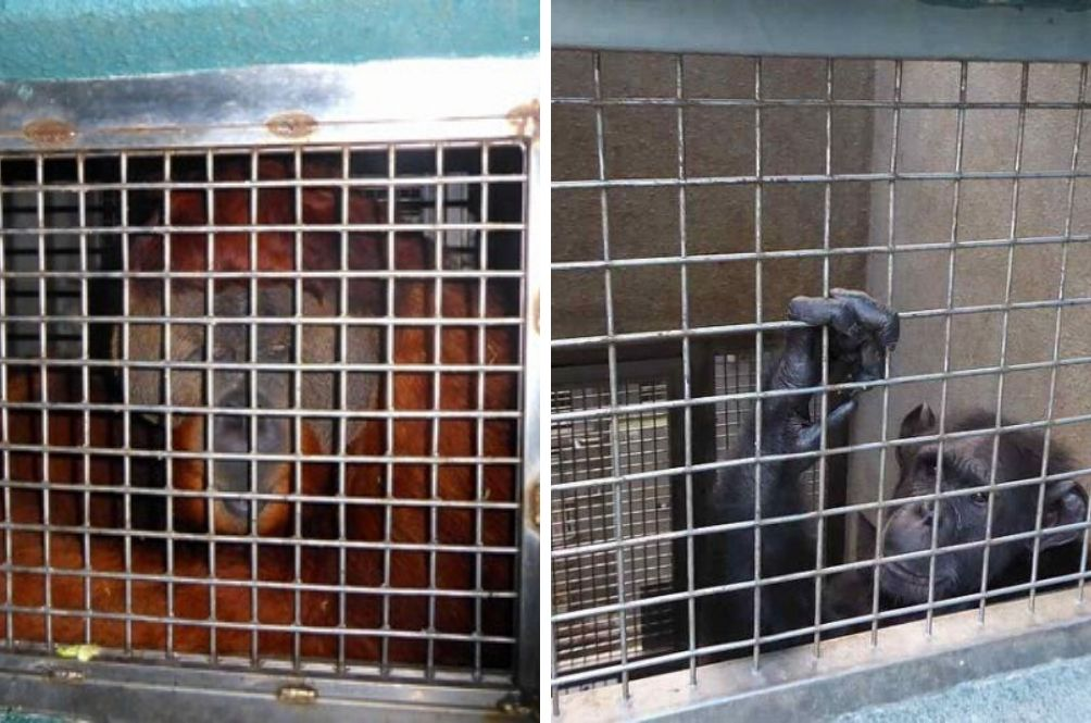 Zoo Negara Expands Night Cages That Failed To Meet Size Requirements By Law