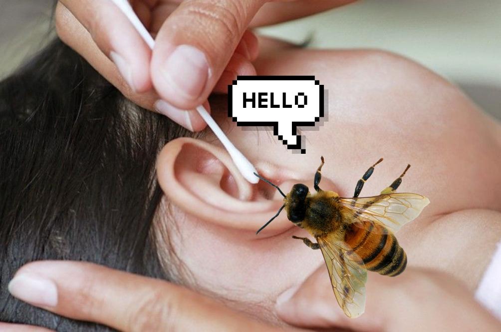 Jangan Main Sumbat Je, Ini 6 Tips Sekiranya Telinga Anda Dimasuki Serangga