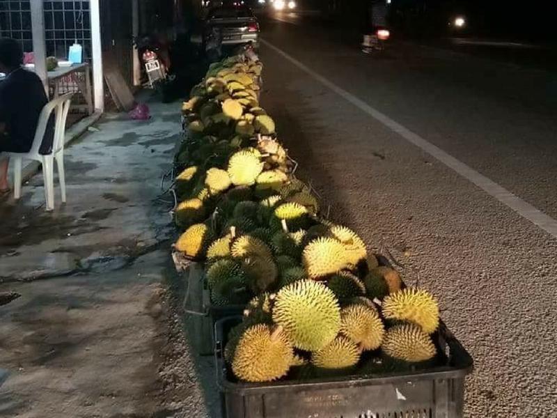 Difahamkan durian sudah mula dijual sekitar Kampung Gajah dan Taiping, Perak.