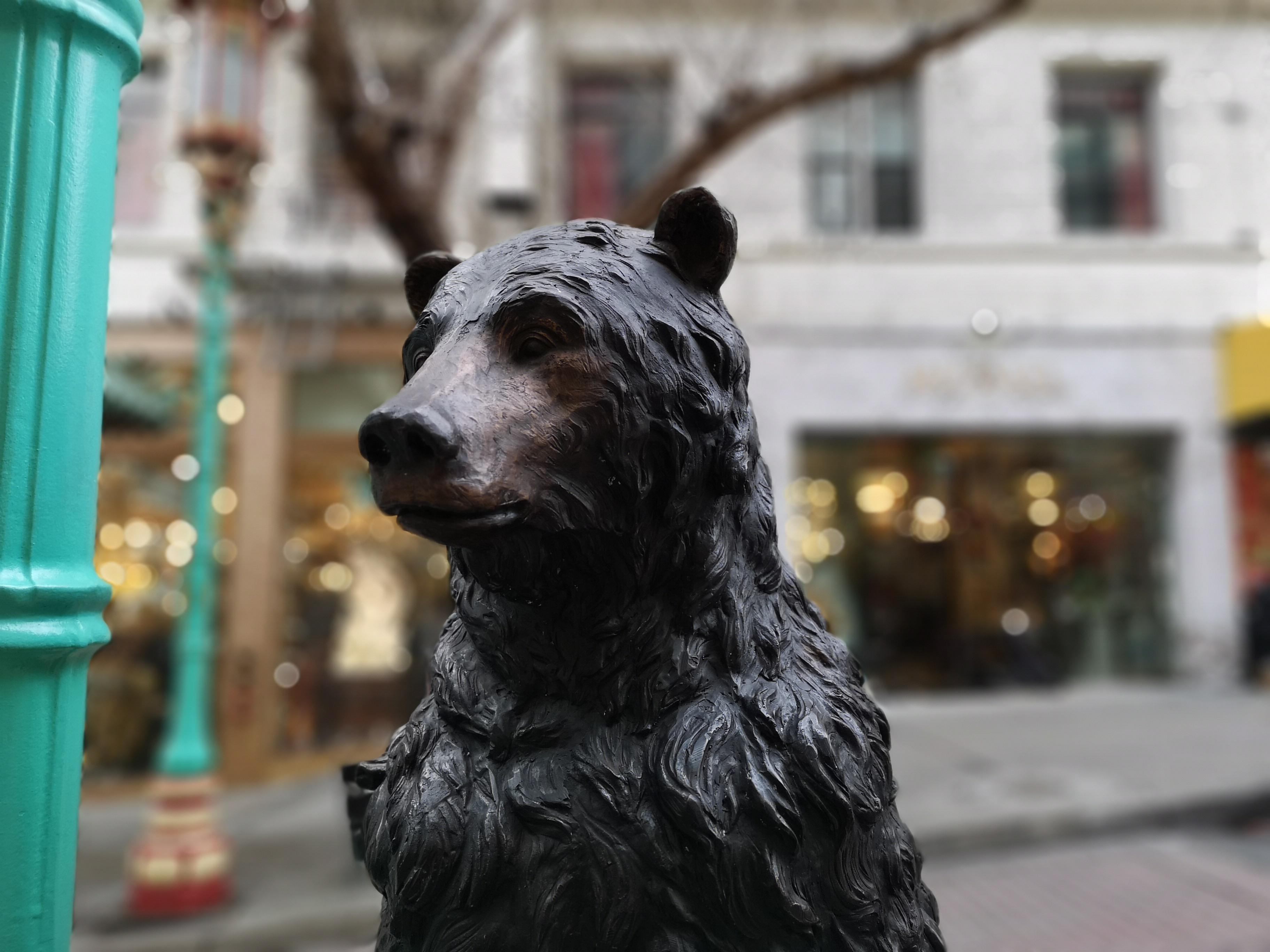 Lihatlah kualiti fokus pada imej beruang ini.
