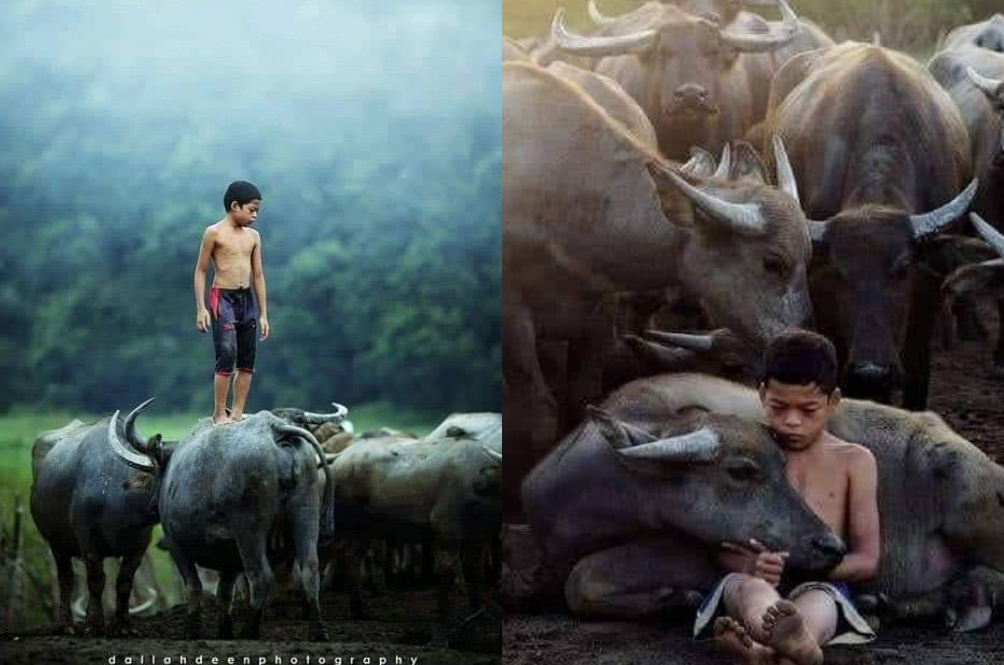Priceless! Gambar Pelajar Bermain Bersama Kerbau Ini Merupakan Juara Asia Dan 20 Terbaik Dunia!