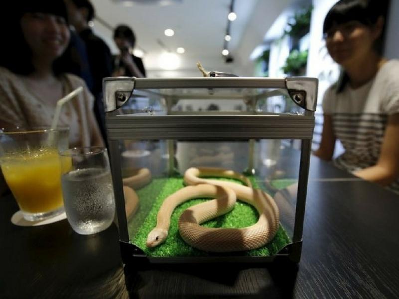Sambil jamu selera, sambil melihat keunikan spesis ular