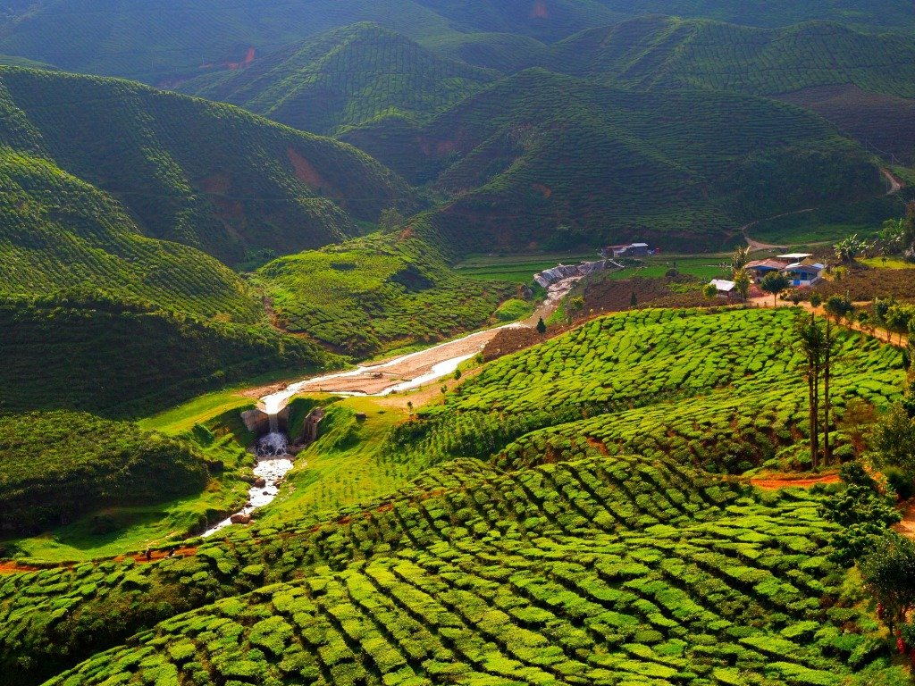 The scenic Bharat Tea Plantation.