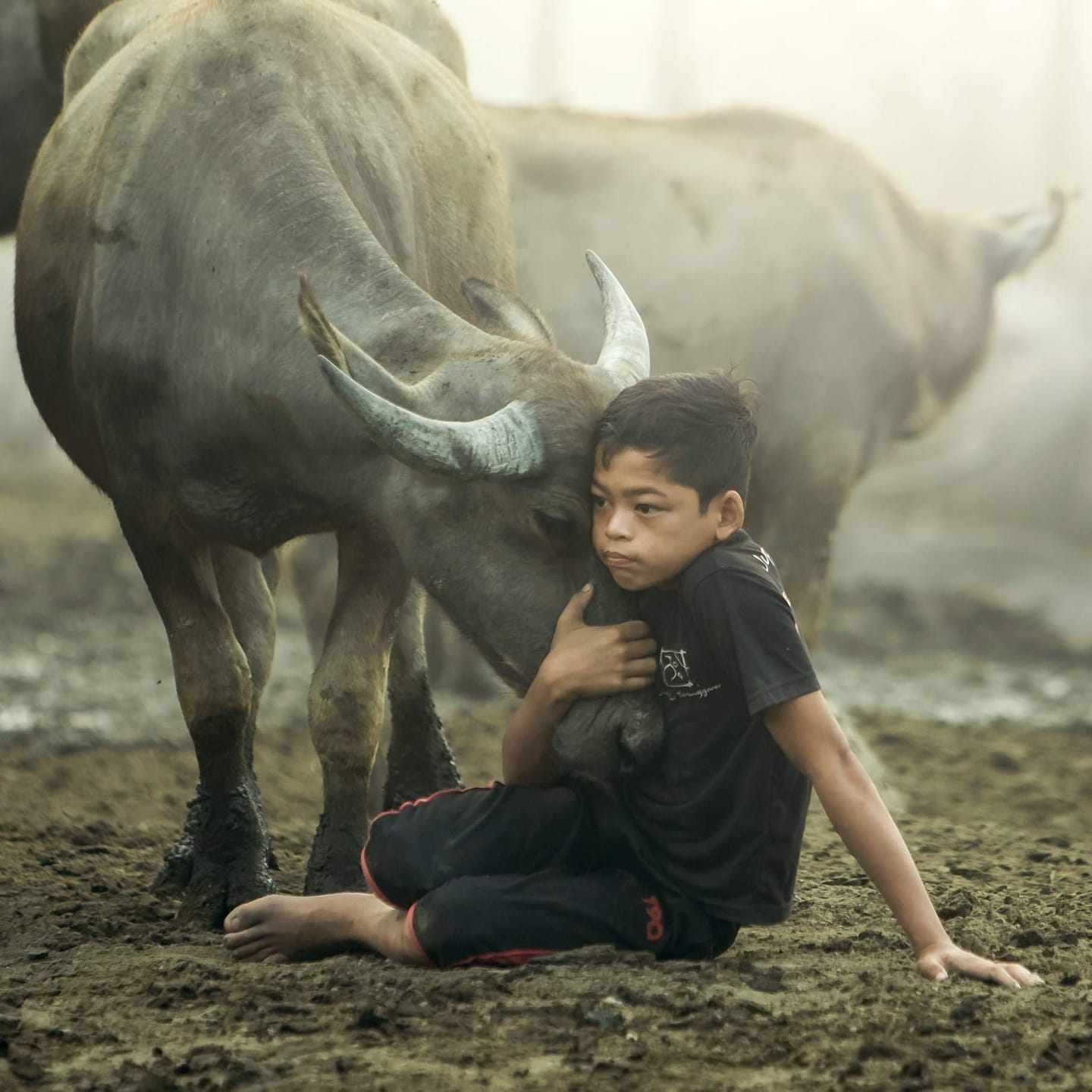 See how genuine his love for buffaloes is!