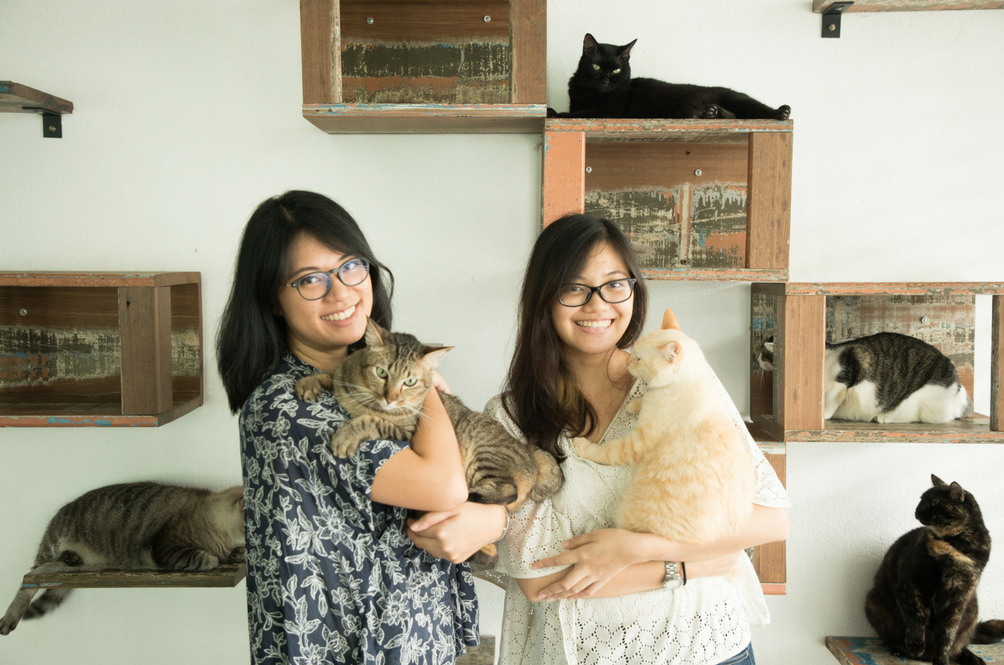 80 Cats And Counting: Meet Malaysia's Ultimate Cat Family