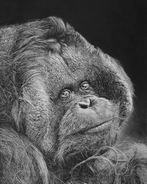 Hyper-realistic orang utan.