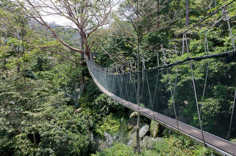 FRIM Canopy Walk Closes Permanently Effective 30 June