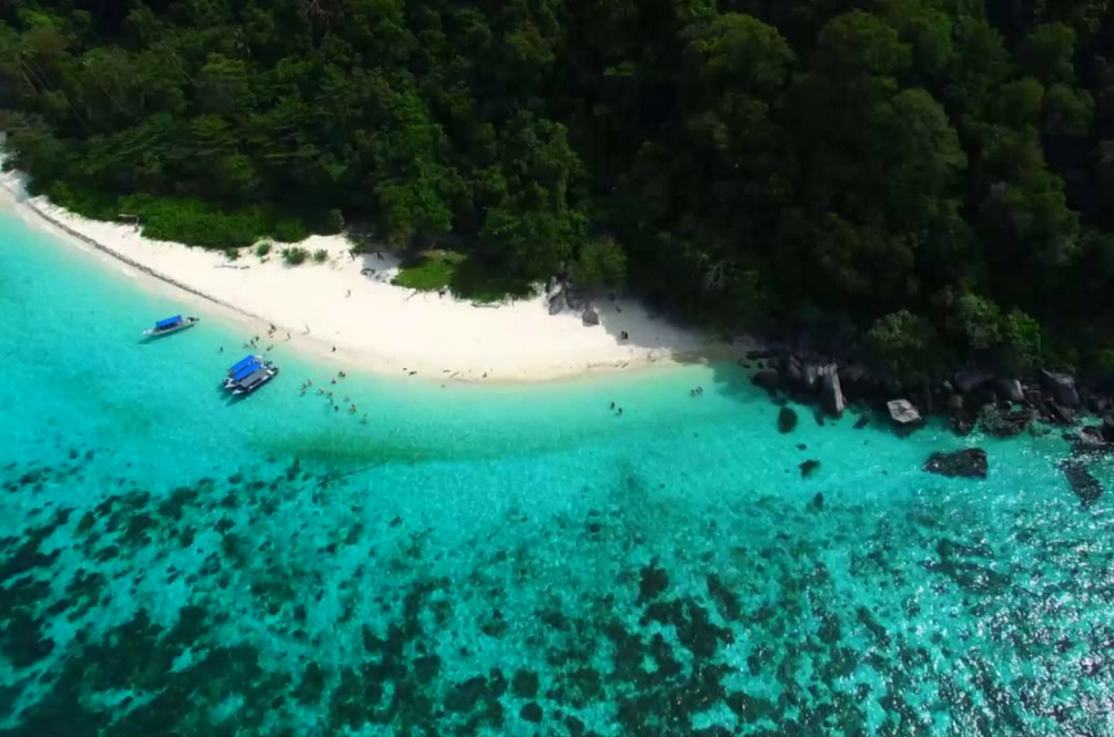 Guys, We Need Your Help To Preserve The Beautiful Corals Of Tioman Island Or Else It Would Disappear