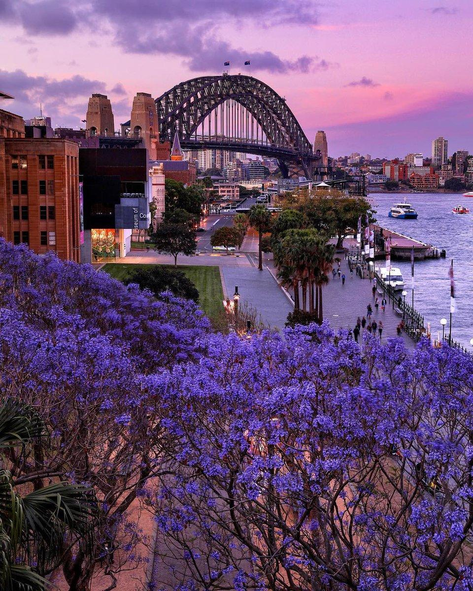 Purple-hued skies, purple-hued blooms. Perfect.
